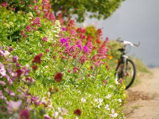 Bike w:flowers