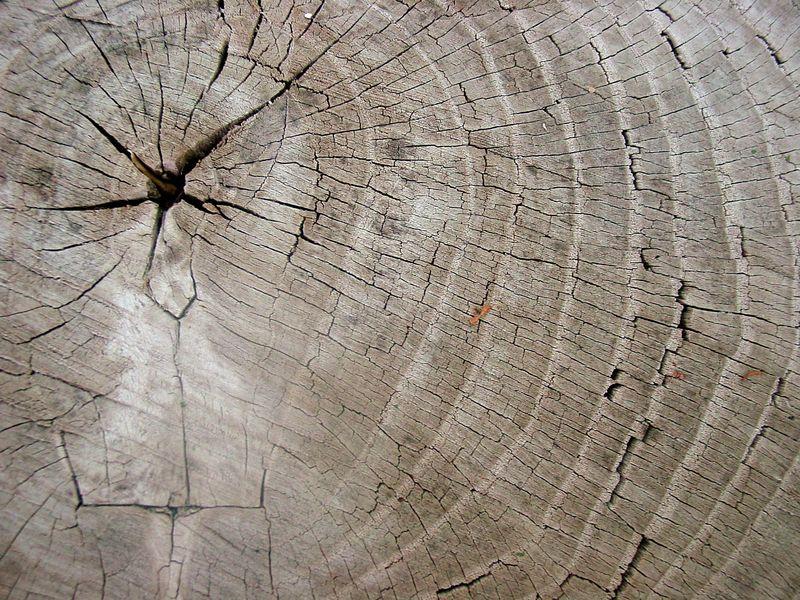 Treetrunklines